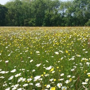 Plug plant and plant wildflower collections